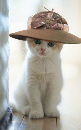 What a Cute White Kitten with Pale Mauve Wide Brim Hat With Silk Flower Feathers And Sequins Accent from That Way Hat