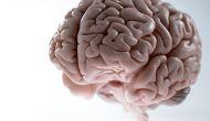 sinapsis: ¿sabes como se conectan tusneuronas?