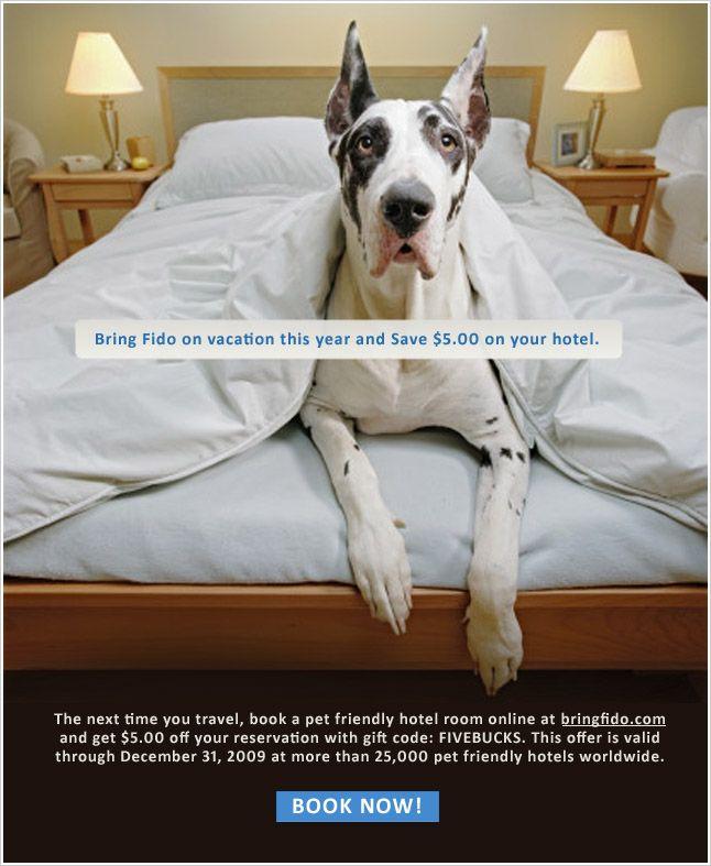 BringFido.com - website for pet friendly accommodations, air travel, restaurants, etc.