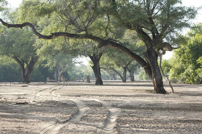 Where else in Africa but Mana Pools?