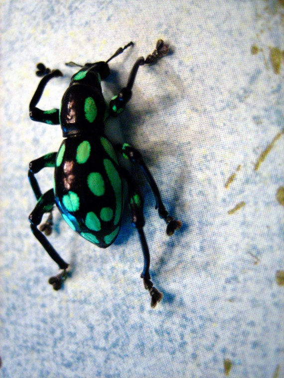 14 Best Colorful Insects Images On Pinterest