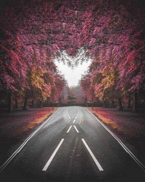heart, beautiful, and photography image