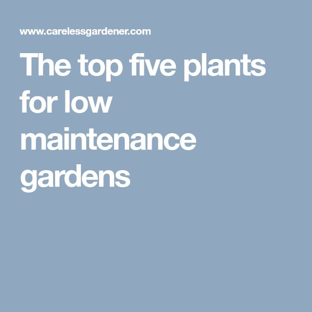The top five plants for low maintenance gardens