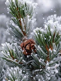 """seasonalwonderment:  """"Frost Covered Branches ~ Photo by Stockbyte on Getty Images"""