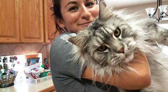 big fluffy and definitely adorable maine coon cat 10 pictures 10