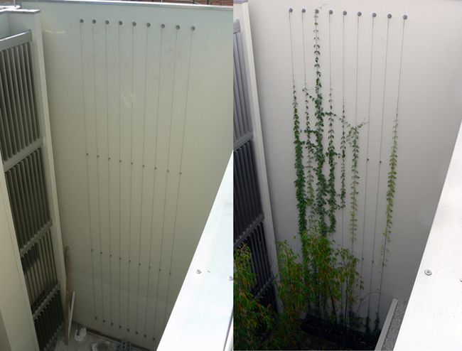 Bondi Beach Green Facade (Before and at 2-3 months old) | Tensile Design & Construct