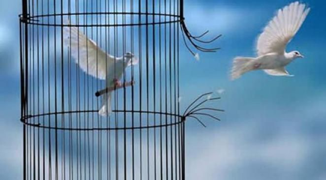 La force d'un oiseau n'est pas d'avoir peur de la branche  ,mais le fait de croire en ses ailes. ♥