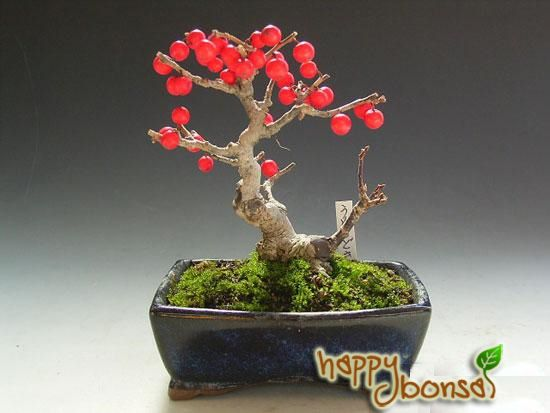 17 best images about bonsai 2 on pinterest trees prunus and bonsai trees. Black Bedroom Furniture Sets. Home Design Ideas
