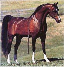 Khemosabi~(1967–2001) was a bay Arabian stallion with four stockings and a blaze. Khemosabi is the top producing Arabian Stallion of all-time. He is a U.S. and Canadian National Champion.