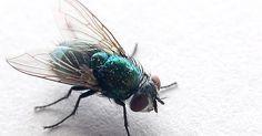 Lösungen für Stuben-Fliegen und 3 Anleitungen für selbstgebaute Fliegenfallen - Bild von John Talbot [CC-BY-2.0]