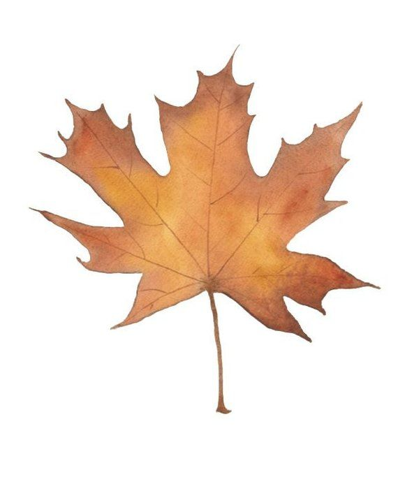 Watercolor Clipart Fall Leaves 7 Maple Leaf 7 Oak Leaf 5 1 2 Birch Leaf Png Clipart Hand Painte Malerei