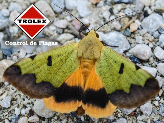 610 mejores imgenes de Mariposas en Pinterest  Mariposas