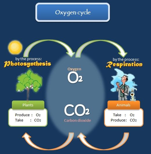 17 Best images about Science Project on Pinterest | Coloring, Anchor charts and Carbon cycle