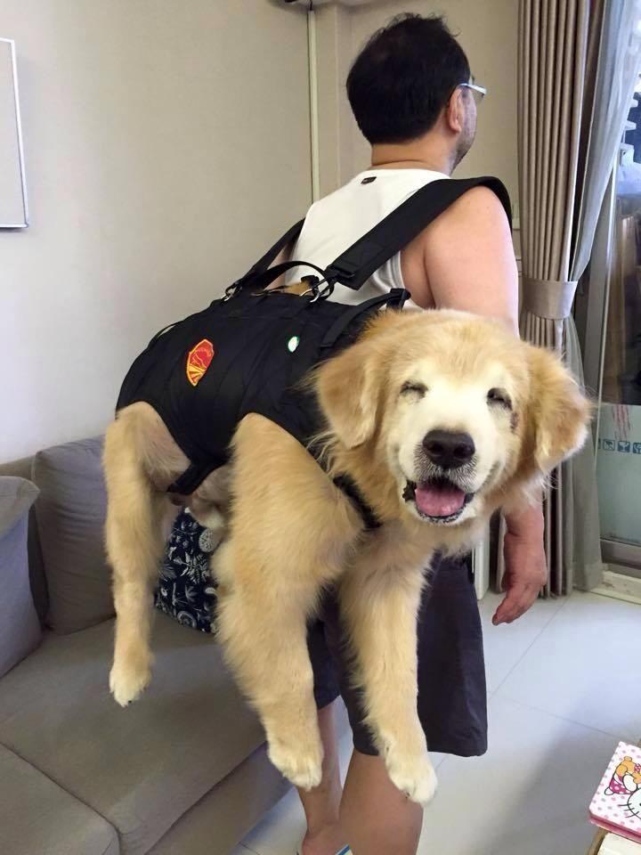 Einfach mal den Lieblings-Vierbeiner einpacken und ab in den Urlaub! :)