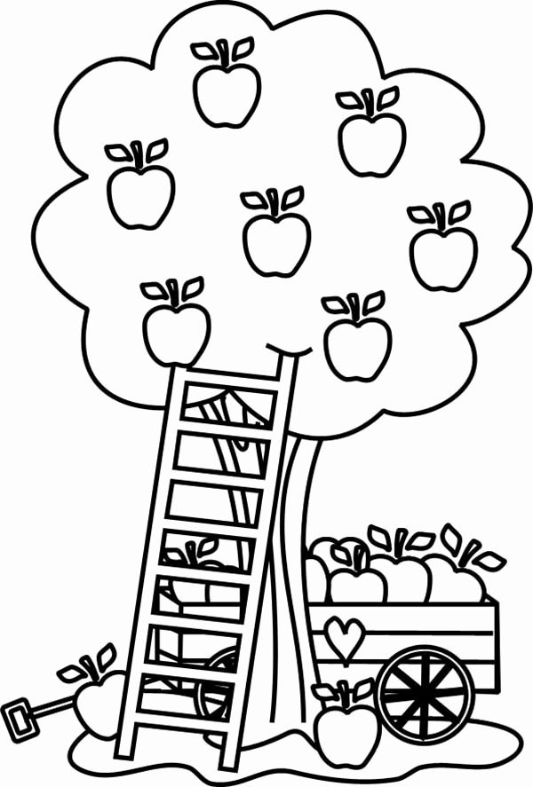 Apple Tree In The Fall Coloring Pages For Kids Apple Coloring Pages Tree Coloring Page Fruit Coloring Pages