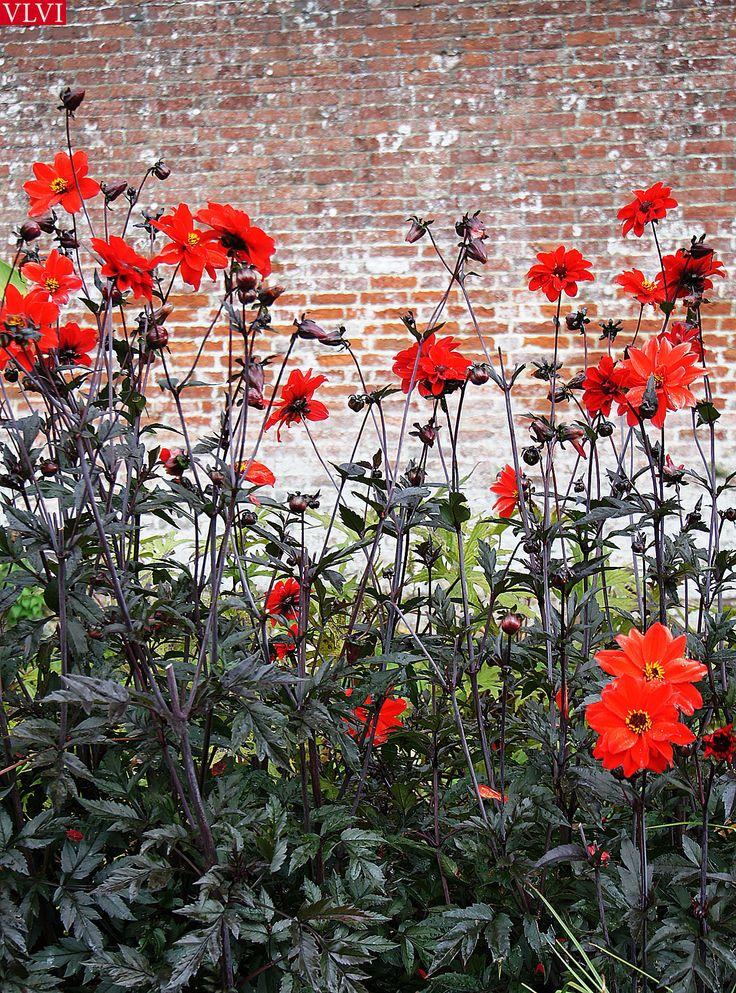Stourhead-Wiltshire gardens, GB. VLVI2014