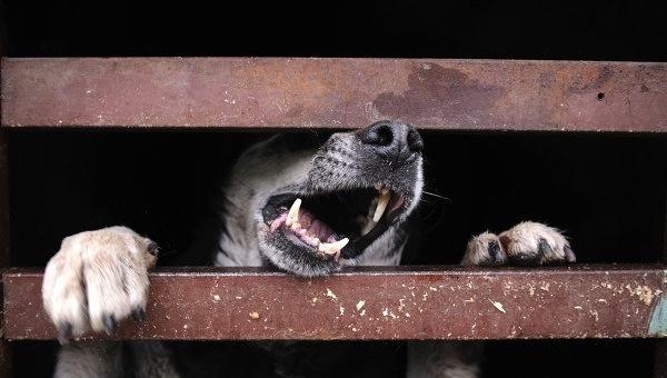 [DOSSIER] Le notti senza incubi degli ammazza-cani russi   All-4Animals