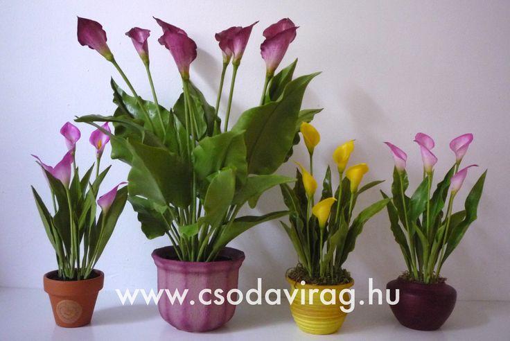 Zantedeschia  (Kála) - My clay flower https://www.facebook.com/Csodavirag