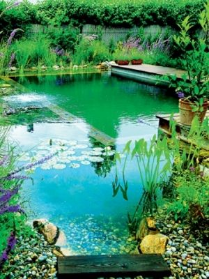 This is a natural swimming pool. Filtered by aquatic plants and a fountain.