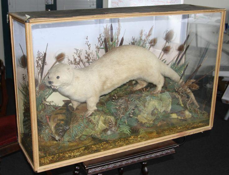 antique taxidermy display case Otter Victorian English fish stuffed pub rare odd  | eBay