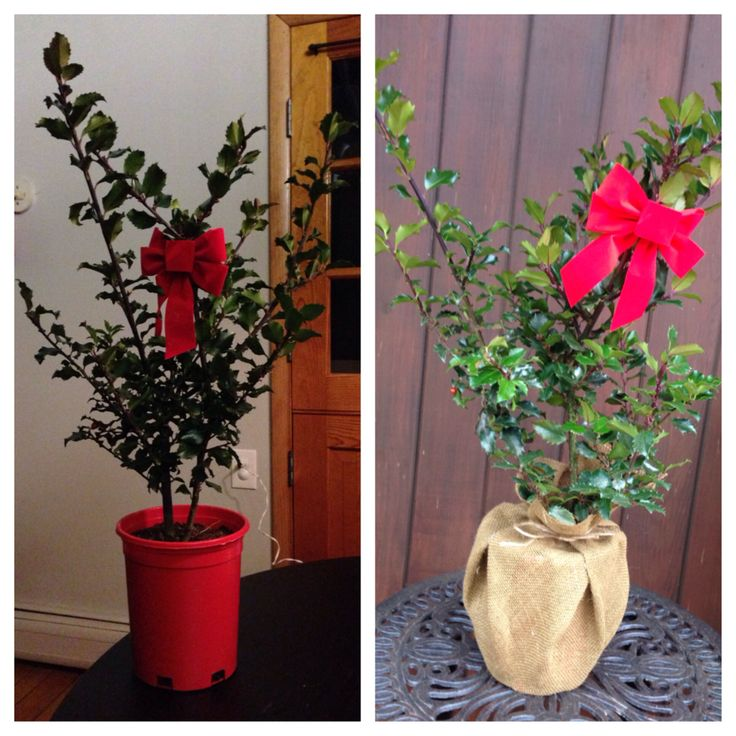 """Instead of spending twice the price on a """"fancy"""" holiday plant or a ceramic pot, but the cheap one and decorate it yourself.  All I did was cover the plastic pot with burlap!"""