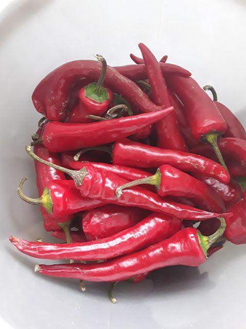 Łyżka i Motyka: Papryczka chilli marynowana