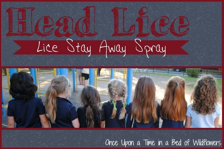 Lice Stay Away spray  Fill a 5 ounce (1/2 cup) spray bottle with water.  Add 25 drops  of essential oils: For best results, use 5 drops EACH of the following: Tea Tree  Lavender  Rosemary  Peppermint Eucalyptus I added Citronella too  Shake well before spraying on your child's hair.