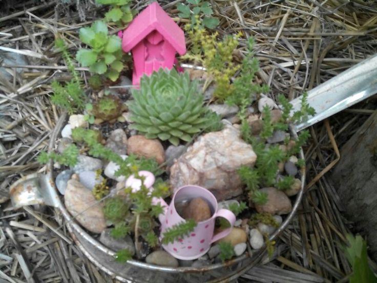 micro fairy garden