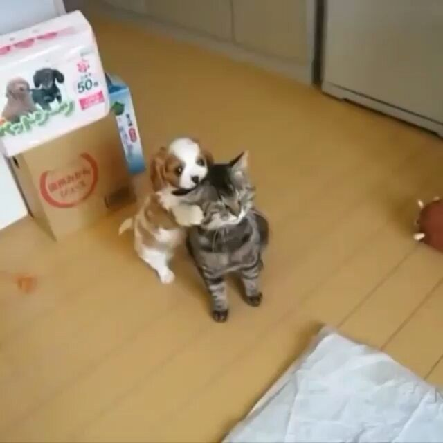 😂 😂 😂 Video via @wang_ziyuu Tag your friends below 👇 #babyanimalshq  Tag #babyanimalshq and follow us to be featured.