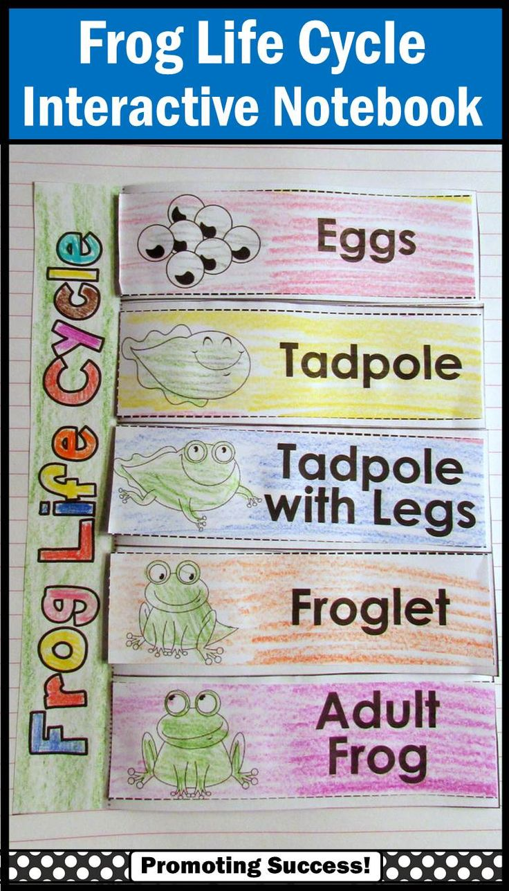 Frog Life Cycle: Your students will love this printable frog life cycle…