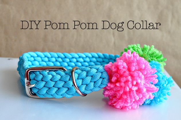 DIY Pom Pom Dog Collar- make your dog feel extra cute with this simple DIY. Fun…