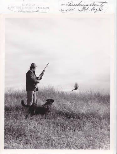 Pheasant Hunting in South Dakota http://blackhillsknowledgenetwork.org