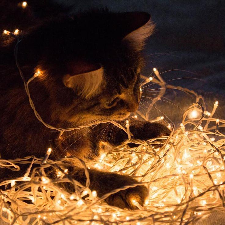 У котиков тоже #новогоднеенастроение :)) #новыйгод # ...