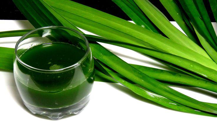 Натуральный Зеленый ПИЩЕВОЙ краситель из листьев пандана - natural food ...