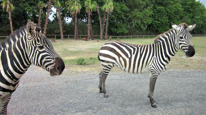 The Réserve Africaine in #Sigean, #France: safari park meets zoo #Europe #travel
