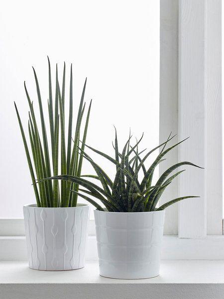 25 melhores ideias de plantas de interior resistentes no for Plantas de interior resistentes