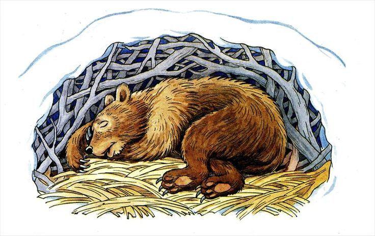чехлау картинка мишка спит в берлоге зимой способны