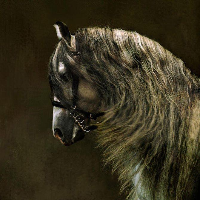 ..Equine Photography, Arabian Hors, Beautiful Hors, Hors Pictures, Hors Art, Hors Photos, Andalusian Horse, Hors Pics, Hors Photography