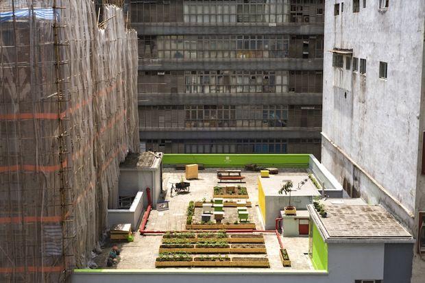 The Impact of Urban Farming in Berlin and Hong Kong