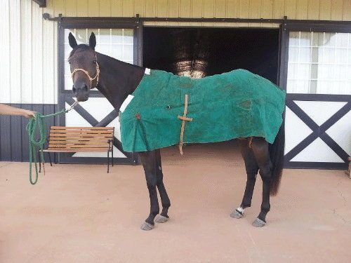 Used Green Canvas New Zealand Turnout Rug Horse Blanket Ebay