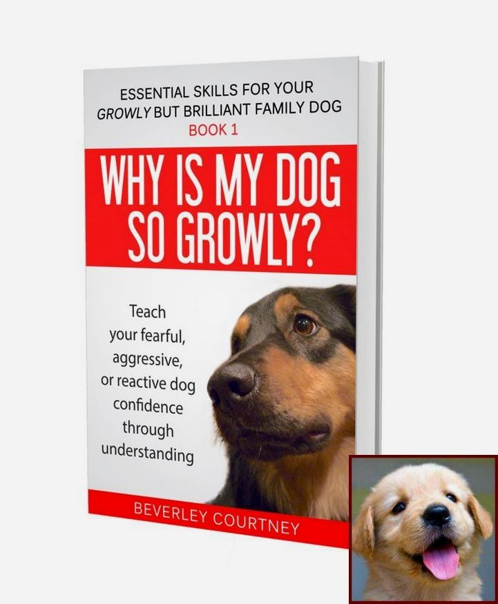 1 Have Dog Behavior Problems Learn About Dog Behavior After Vomiting And Clicker Training Dogs Dog Behavior Problems Dog Clicker Training Training Your Puppy