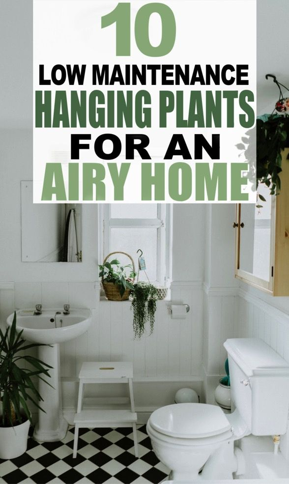 10 Hard To Kill Hanging Plants That Ll Make Your Home Look Amazing In 2020 Hanging Plants Powder Room Decor Home Look