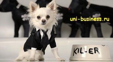 Идеи костюмов для собак