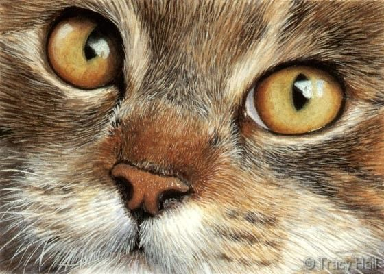 Cat portrait in watercolour by Tracy Hall. Simply amazing! This looks like a photograph.