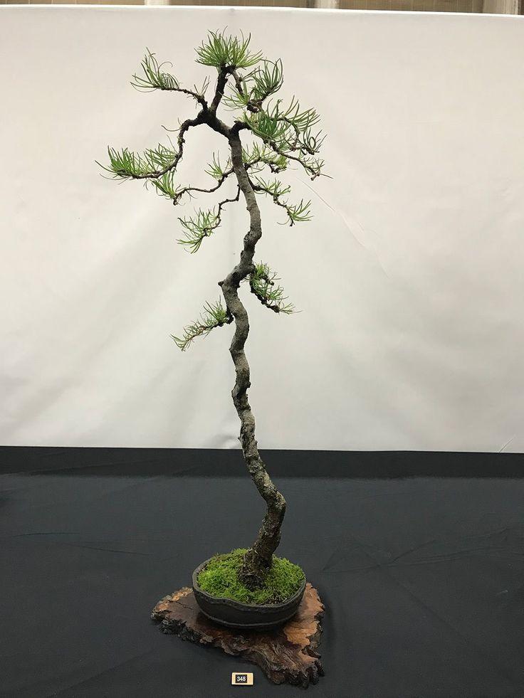 https://swindon-bonsai.co.uk/