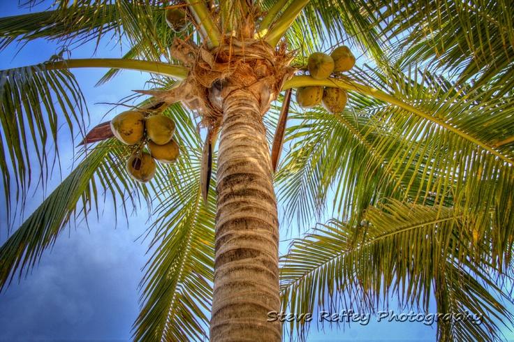 Coconut Palms, Cozumel