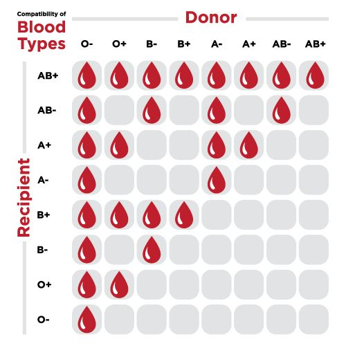 blood group donor and acceptor chart: Best 25 blood donor chart ideas on pinterest blood