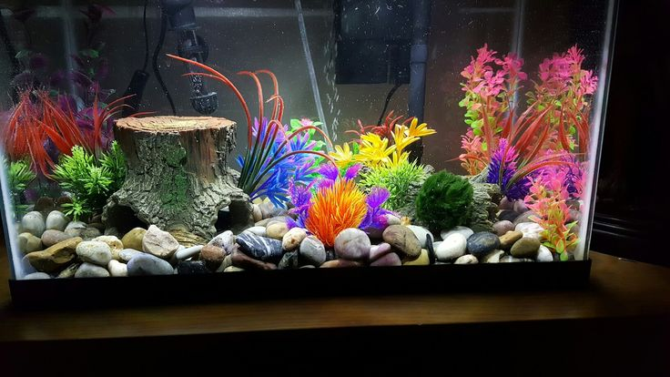 1000 images about glow fish and tank ideas on pinterest for Glow fish tanks