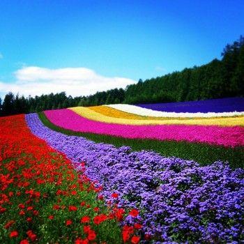 紫色の絨毯が広がる♪ 夏の北海道旅行におすすめ【富良野のラベンダー畑】4選