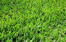 When to grow what grass in your state. Gives a chart with best grass and planting time frame as well as agricultural zones map.